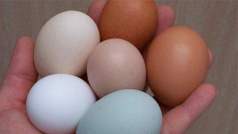 Chuyên gia khẳng định: Ăn trứng gà theo cách này