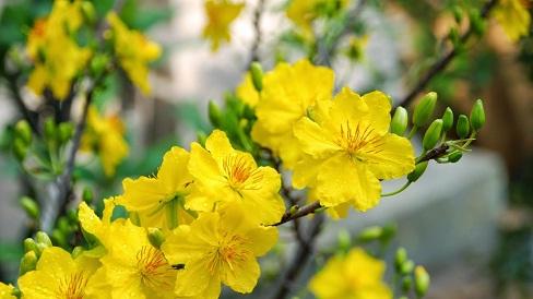 Bài văn khấn phổ biến trong dân gian dùng trong lễ hóa vàng ngày Mùng 3 Tết