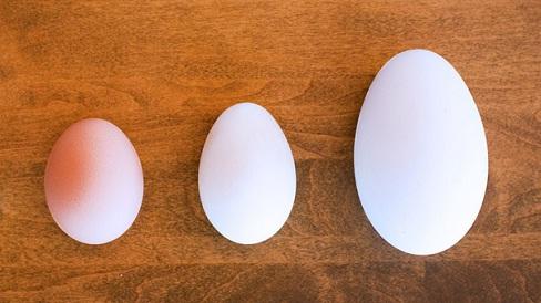 Trứng ngỗng có bổ hơn trứng gà và trứng vịt hay không?