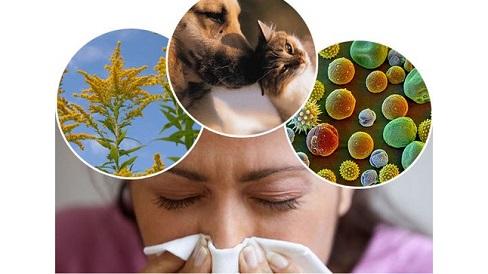 Nếu bạn nghi mình bị dị ứng theo mùa, tham khảo các loại thuốc chữa trị này nhé
