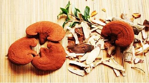 Nấm linh chi có tác dụng ngừa xơ cứng mạch