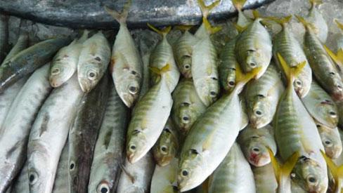 Mẹo vặt phân biệt cá tươi ngon không ướp hàn the, urê