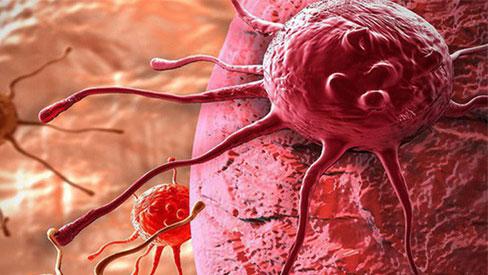 2 protein được phát hiện ở da người tự hủy tế bào ung thư