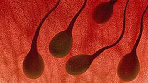 Khi xuất tinh ra máu là bệnh gì?
