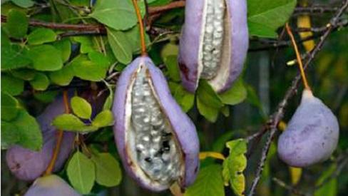 Bỏ túi những bài thuốc Đông y đối phó với bệnh tay chân miệng sắp vào mùa dịch