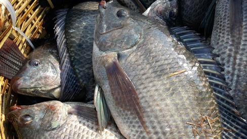 Chuyên gia đưa ra danh sách 11 loại cá chứa nhiều chất dinh dưỡng có lợi cho sức khỏe