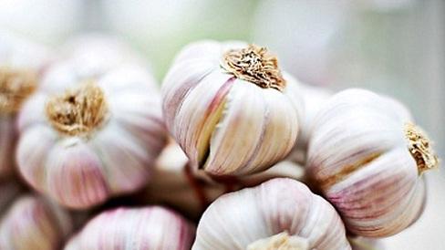 Tác dụng chữa bệnh của tỏi được biết từ hàng nghìn năm nay