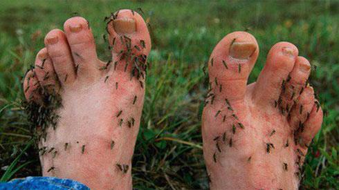 Lại đến mùa nhiều muỗi, học ngay những cách