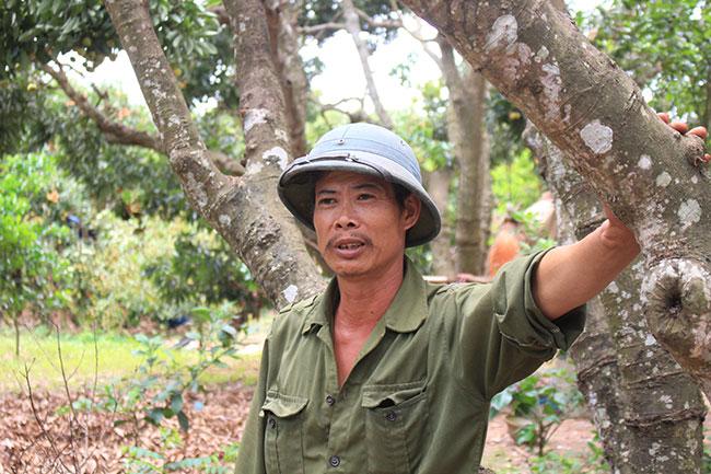 Bắc Giang: Cận cảnh cây vải tổ 39 năm cho doanh thu khủng-14