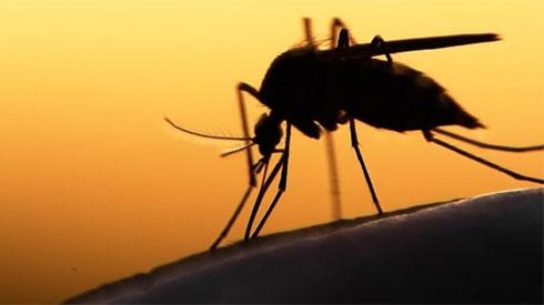 Cẩn trọng 7 loại bệnh nguy hiểm do muỗi trong mùa mưa