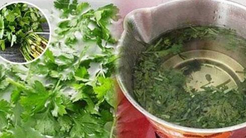 Bạn đã biết cách chế biến rau mùi để chữa bách bệnh chưa?