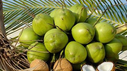 Những bài thuốc hay từ quả dừa nhiều người không biết