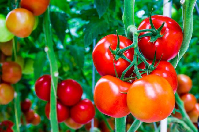 6 cách ăn cà chua có hại cho sức khỏe cần tránh-1