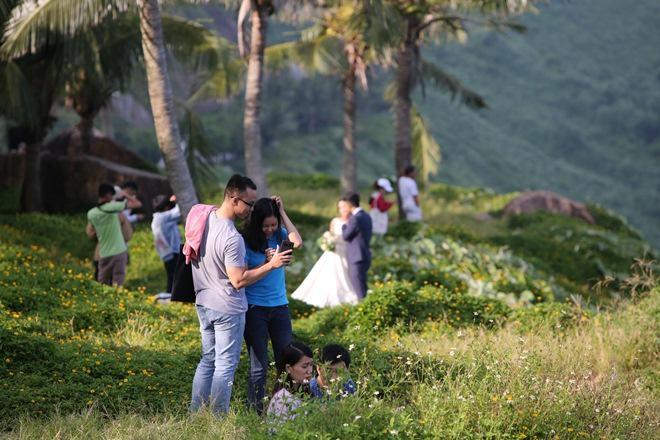 """Du khách mê mẩn Hoa vàng trên cỏ xanh"""" trên đỉnh Sơn Trà - Đà Nẵng-11"""