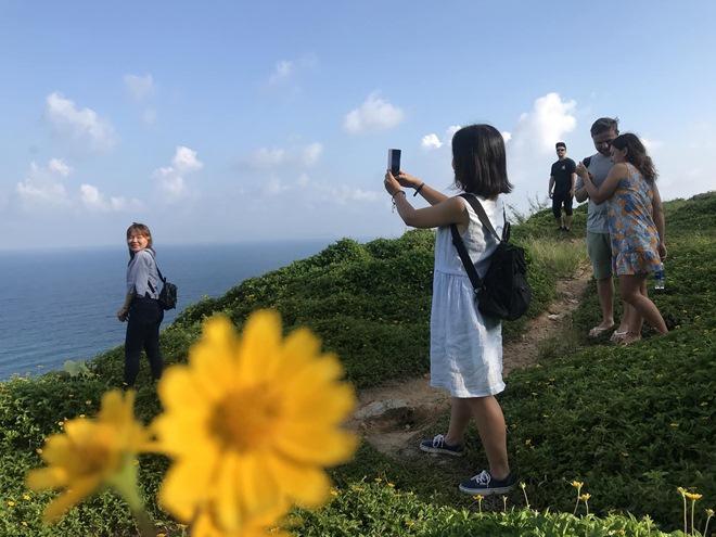 """Du khách mê mẩn Hoa vàng trên cỏ xanh"""" trên đỉnh Sơn Trà - Đà Nẵng-9"""
