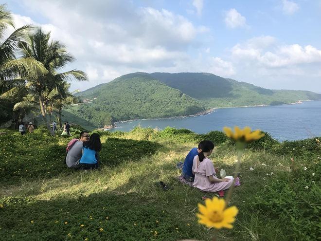 """Du khách mê mẩn Hoa vàng trên cỏ xanh"""" trên đỉnh Sơn Trà - Đà Nẵng-8"""