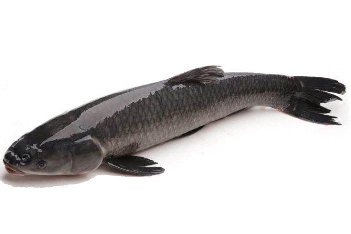 Người phụ nữ nhập viện cấp cứu vì ăn cá, cảnh báo bộ phận gây nguy hiểm-2