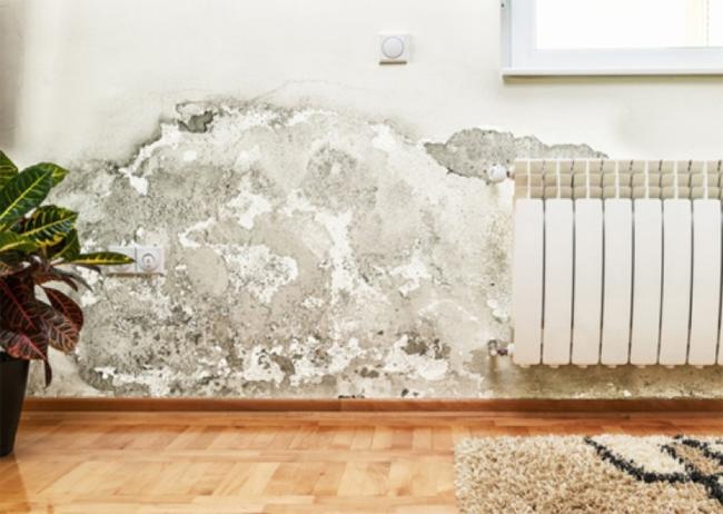 Cảnh báo: Nấm mốc trên tường có thể khiến bạn tử vong-1