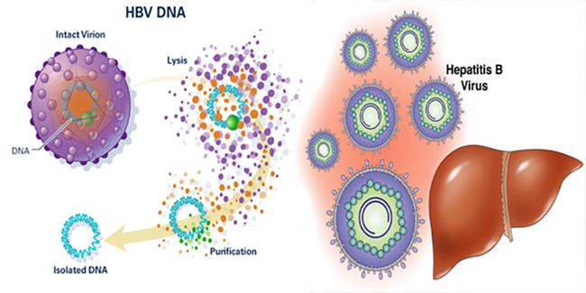 4 yếu tố không ngờ có thể gây viêm gan B: Hầu hết mọi người đều có thể mắc mà không biết-2