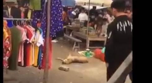 Phẫn nộ:  Chú chó bị đập không còn đường sống khi chạy vào chợ