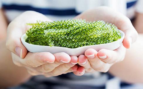 Rong nho: Siêu thực phẩm giàu chất dinh dưỡng