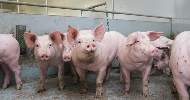 Chuyên gia: Tẩy chay thịt lợn việc làm hết sức sai lầm-2