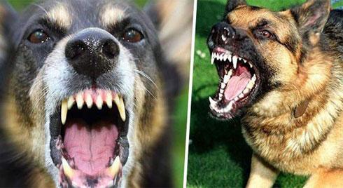 Cách xử lý khi bất ngờ gặp chó dữ trên đường