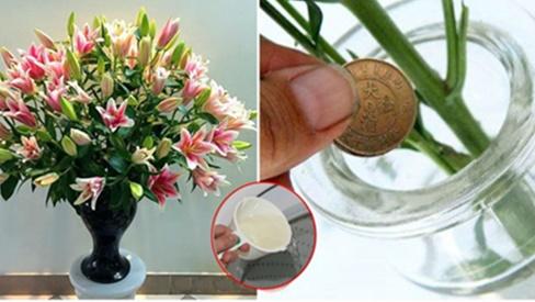 Đừng dùng nước, cắm hoa bằng thứ này đảm bảo 10 ngày sau vẫn tươi mơn mởn, hương thơm ngào ngạt cả phòng