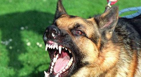 Sau loạt vụ trẻ bị chó cắn gây thương tích nặng và tử vong: Đây là những việc cần làm để tránh bị bệnh dại