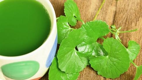 Nước uống giải nhiệt từ thảo dược
