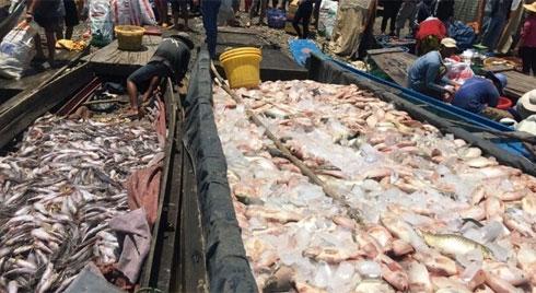 Cá chết trắng sông, dân bán nhà trốn ô nhiễm, ngành TN&MT ở đâu?