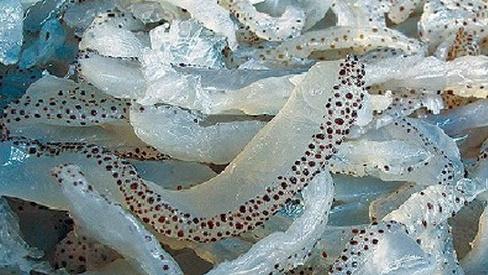 Một số bài thuốc tốt từ sinh vật biển