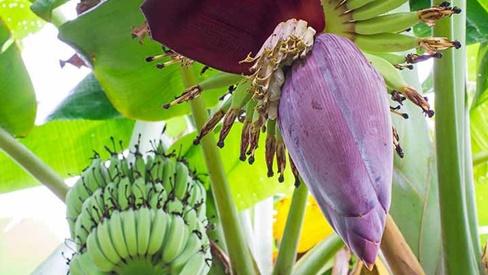 Hoa vườn nhà: Dân dã mà hữu dụng
