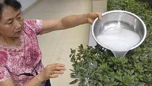 """Thấy vợ ngày nào cũng đỏ nước gạo ra vườn, chồng dò theo và phát hiện điều """"bí mật"""" sau 2 ngày"""
