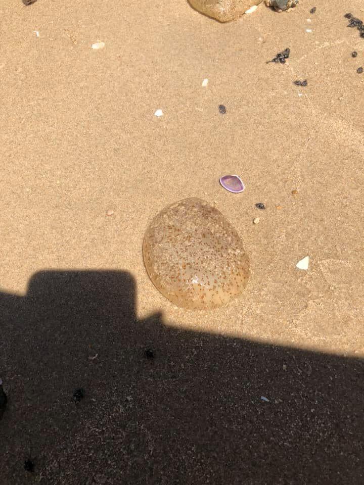 Bãi tắm ở Vũng Tàu xuất hiện nhiều sứa lửa, mùa này đi biển có gặp thì nhớ bỏ túi loạt bí kíp này nhé!-5