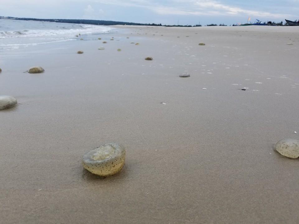 Bãi tắm ở Vũng Tàu xuất hiện nhiều sứa lửa, mùa này đi biển có gặp thì nhớ bỏ túi loạt bí kíp này nhé!-2