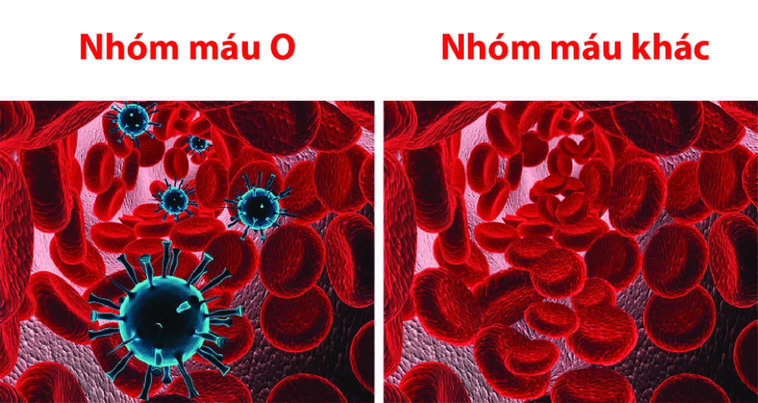8 sự thật thú vị về nhóm máu O không phải ai cũng biết-2