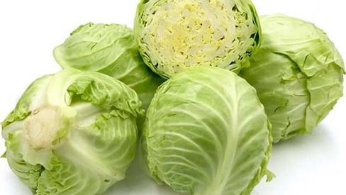 Bắp cải - Cây rau, cây thuốc