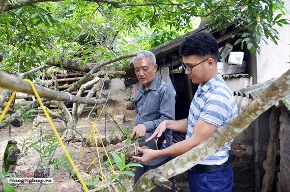 Vườn lan phi điệp tím cổ thụ tiền tỷ nghìn vòi bung nở ở Tuyên Quang-6