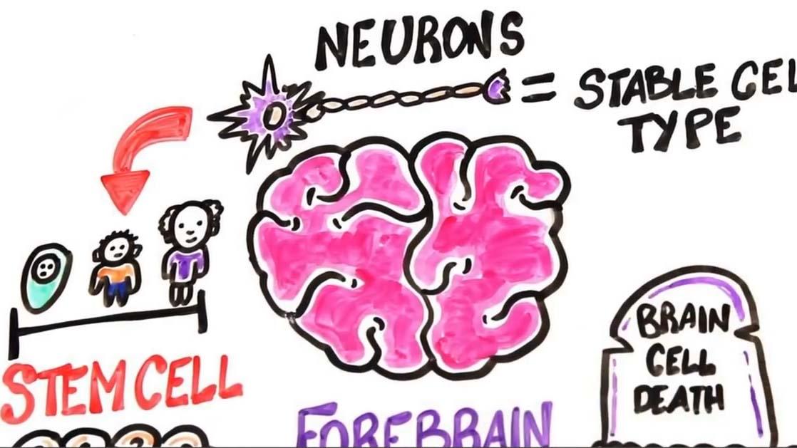 Mất ngủ, hút thuốc, uống rượu, ô nhiễm không khí... phá hủy não bộ như thế nào?