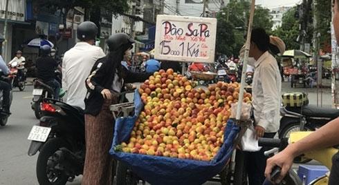 Đào Trung Quốc 'gắn mác' Sapa bán la liệt