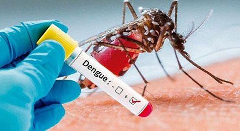TP.HCM: Hơn 24.700 ca mắc sốt xuất huyết, 5 ca tử vong