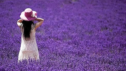 Thuốc từ hoa oải hương lavender