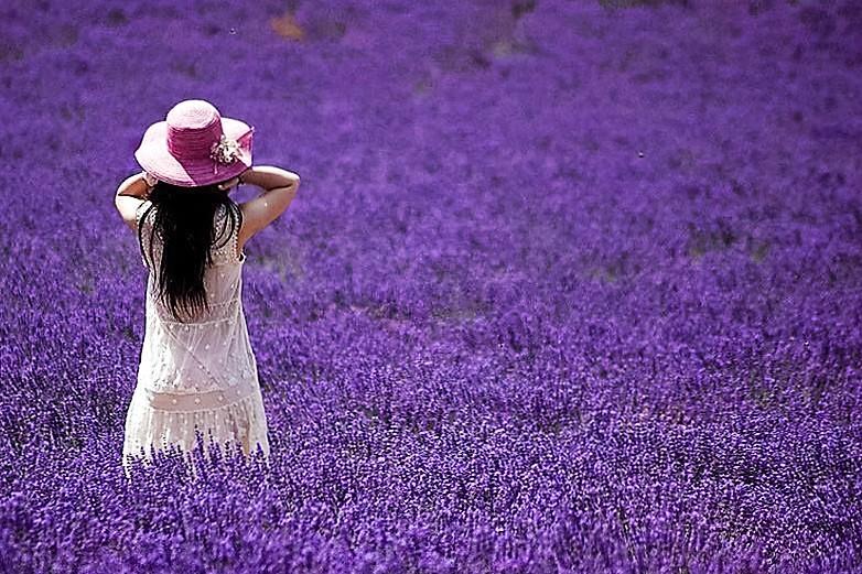 Thuốc từ hoa oải hương lavender-1