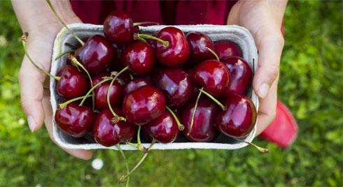 """Cherry """"đắt xắt ra miếng"""", nếu biết hết tác dụng vi diệu của quả này dám cá nhiều người sẽ không tiếc tiền mua ăn"""