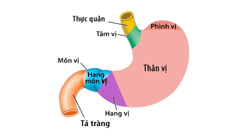 Bệnh viêm hang vị dạ dày: Nguyên nhân, triệu chứng và cách phòng ngừa