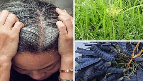 Cách trị tóc bạc sớm từ những nguyên liệu thiên nhiên an toàn - hiệu quả