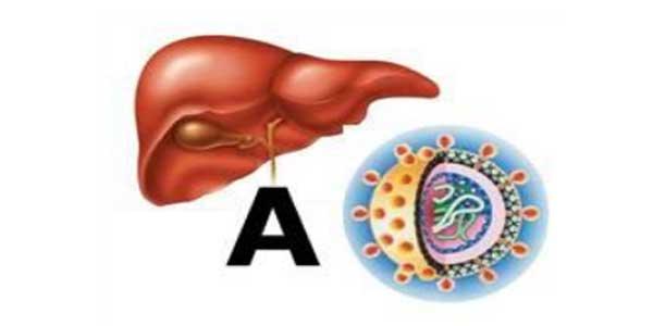 Bệnh viêm gan A lây truyền qua đường nào? Cách điều trị và ngăn ngừa bệnh-1