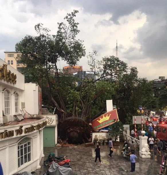 Bão số 4 đang di chuyển vào đất liền, Hà Nội mưa gió khủng khiếp, đã có 1 người chết do cây xanh đè trúng-9