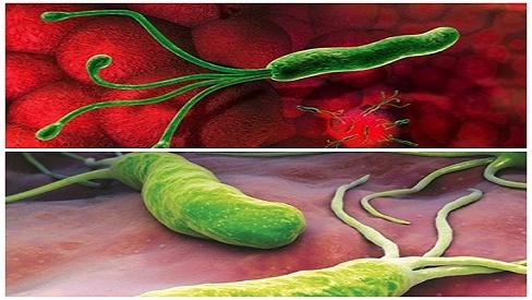 con đường lây nhiễm bệnh vi khuẩn hp dạ dày